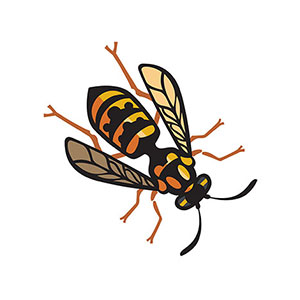 Wasps, Hornets & Yellow Jackets
